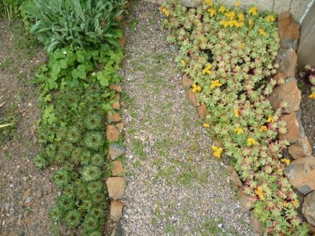 pluie,saison,avril,jardin,fleurs,froidure,écriture,main verte