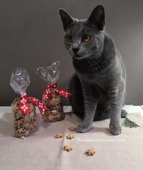 Biscuits ou friandises pour chat ou chien au companion thermomix ou autres robots