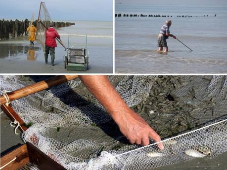 Quend Plage : Pêche à pied