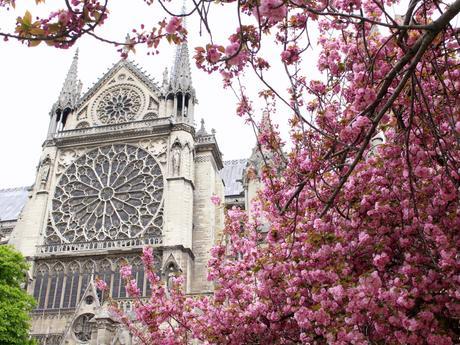 Hanami à Paris…