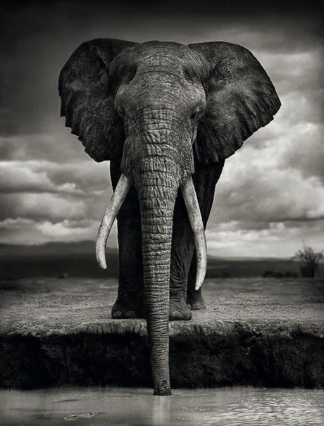 nick-brandt,photography,auction,christies,london,2018