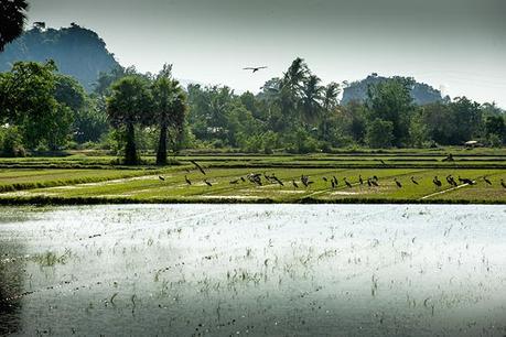 C'est aussi ça la Thaïlande !