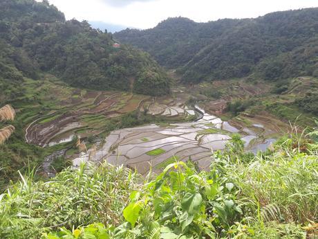 Les rizières de Banaue