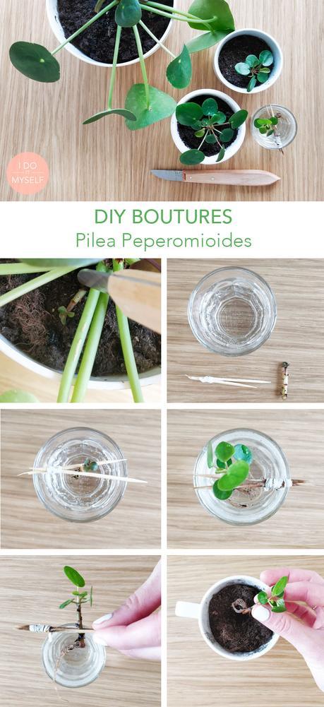 Plantes DIY