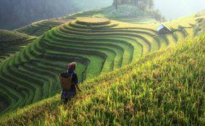 L'empreinte chinoise dans l'agriculture française : coexistence ou conflit ?