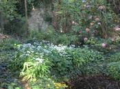 Allium ursinum, Alliaria petiolata, d'ail...