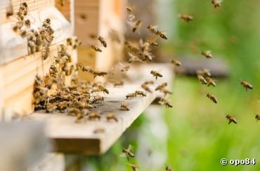 Pesticides : L'Europe dit non aux néonicotinoïdes