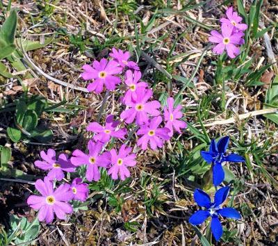 Les fleurs du Kranzberg / Hoher Kranzberg Blumen 28.04.2018 / 35 Fotos
