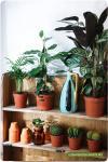 La bise et les petites piquantes : la café végétal éphémère