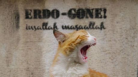 Kedi_Istanbul