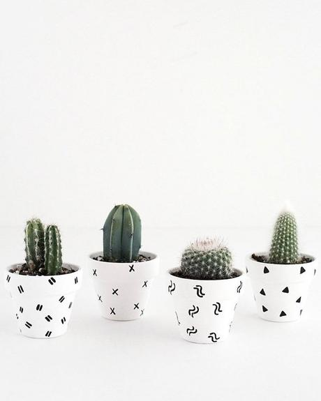deco bucolique cactus vert pots