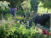 Quoi neuf jardin