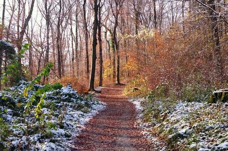vienne stadtwanderweg chemin randonnée urbaine 6 zugberg-maurer wald