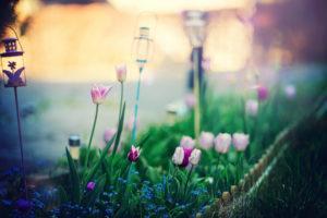 Les fleurs d'avril - Sigma Art 135mm