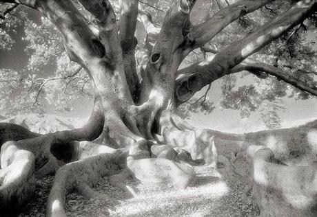 Etre arbre