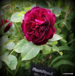 Carnet (de) Rose(s)