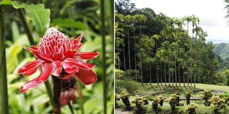 jardin botanique Balata Martinique caraibes antilles voyage blog travelblog