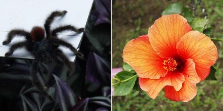 jardin botanique Balata matoutou Martinique caraibes antilles voyage blog travelblog