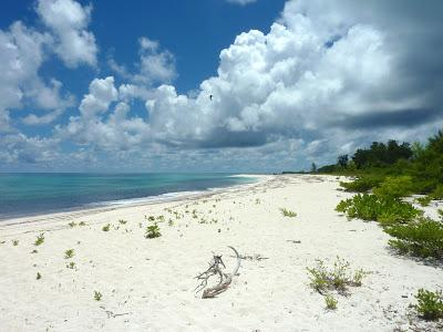 Bird Island : un petit bout de paradis...