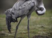 conseils basiques pour photographier animaux sauvages