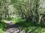 sentier dans bois