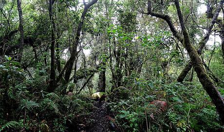 Ascension du volcan Acatenango cloud forest