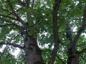 logique l'arbre gêné