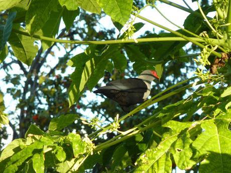 La faune de Bird Island