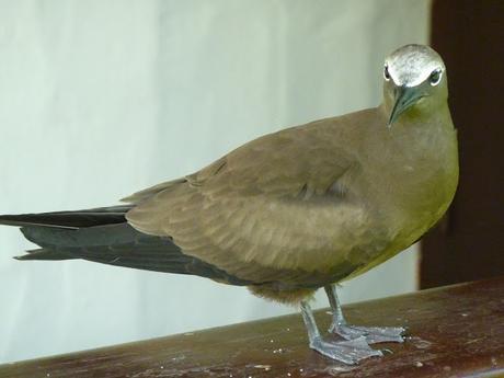 Les Seychelles, le paradis des oiseaux