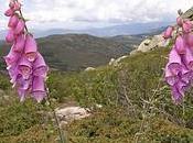 fleurs remarquables montagnes corses