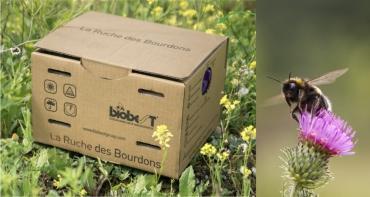 Biodiversité : Et si vous installiez une ruche pour les bourdons dans votre jardin ?