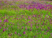Dans champ d'orchidées