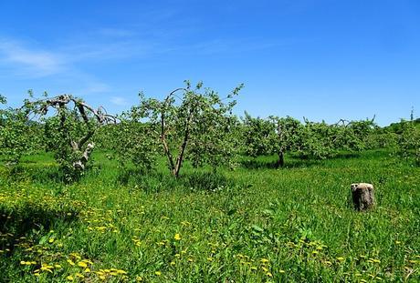 que faire à l'île d'Orléans pommes