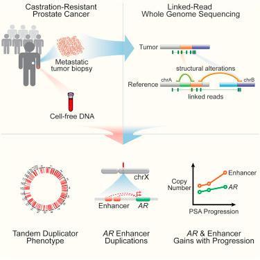 #Cell #cancerdelaprostate #génomique Altérations Structurelles Entraînant un Cancer de la Prostate Résistant à la Castration Révélé par Séquençage Génomique