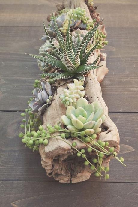 que faire avec un morceau de tronc d'arbre pot de fleurs plantes vertes cactus plantes grasse bois