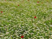 Dans grand champ fleurs