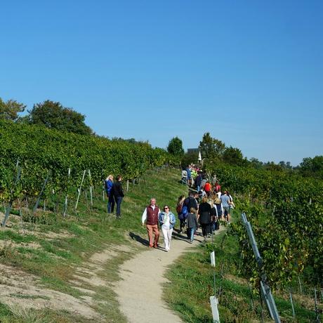 vienne weinwandertag journée randonnée vignes
