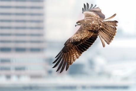 photographie animalière en ville