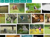 Photographier animaux ville guide