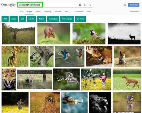 recherche-google-photo-animaliere-ville
