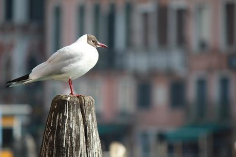 Photographier les animaux en ville : le guide