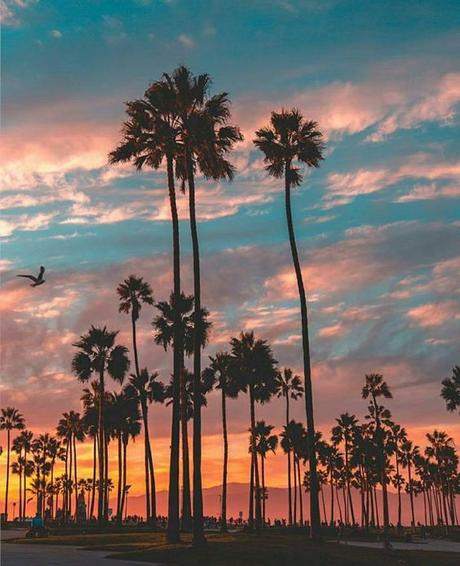 best iPhone wallpapers, tropical vibes, palm trees, sundown