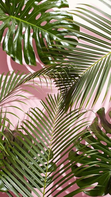 best iPhone wallpapers, tropical vibes, palm leaves