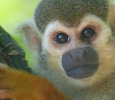 URGENT - #Ecologie - #AVAAZ France: Un cratère dans l'Amazonie?