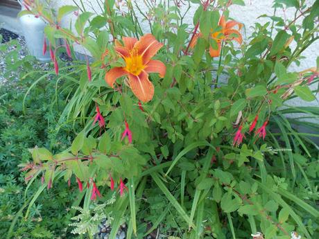 Les plantes sont-elles intelligentes ?