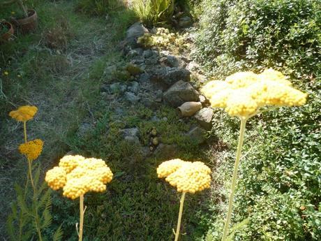 saison,été,chaleur,jardin,fleurs,plantes