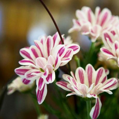 Offrez un Bouquet de Fleurs Bloomon