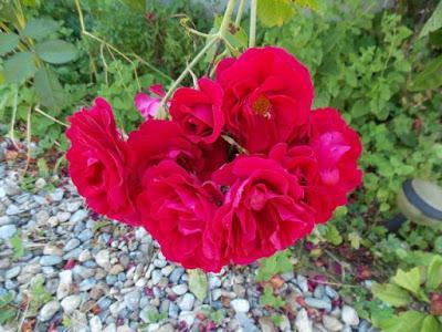 Les fleurs au jardin