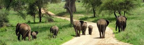 Les premiers safaris en 4×4 électriques