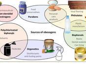 #trendsinendocrinologyandmetabolism #perturbateursendocriniens #obésité Perturbateurs endocriniens obésogènes identifier lacunes termes connaissance